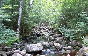 Brown's Brook in the Adirondack Park